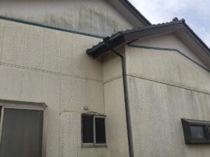 外壁のコケ・カビ 外壁洗浄前(ビフォー)